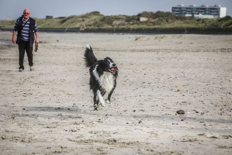 Nu er geen zonnekloppers meer zijn op het strand, hebben honden vrij spel.