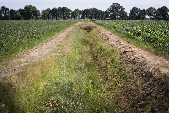 Een droge sloot tussen de akkers met aardappelen  en mais in het buitengebied van het Achterhoekse Halle.