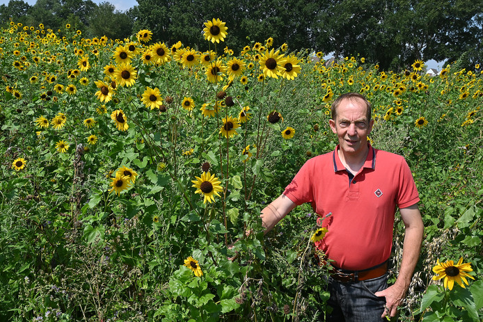 Zonnebloemen en nog veel meer soorten zorgen voor een kleurrijk landschap.