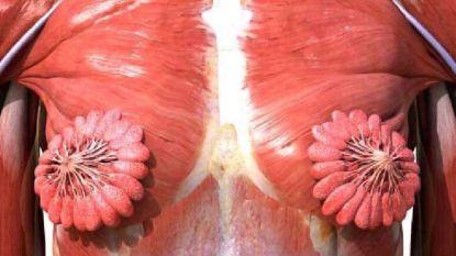 """Prachtige afbeelding van melkklieren gaat viraal: """"Nooit gedacht dat ze zo hard op bloemen lijken"""""""