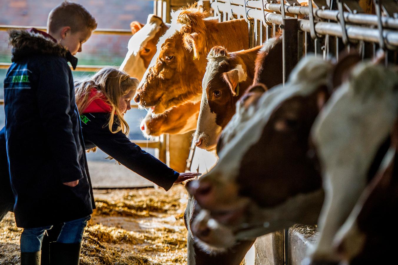 Kinderen uit groep 5a van basisschool De Polderhof uit Oss nemen een kijkje op de boerderij. Dat moet in Zeeland ook vaker gebeuren.