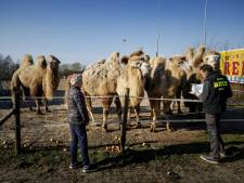 Voedsel voor dieren Circus Renz dreigt op te raken door coronacrisis: 'We zijn blij met alles wat we krijgen'