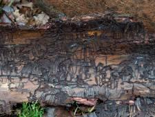 Door kleine kever is bos Loenermark een stuk kleiner