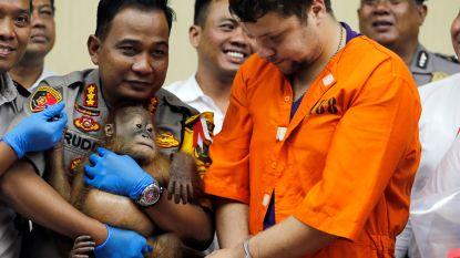 """Rus die orang-oetan drogeerde en in reiskoffer uit Bali probeerde te smokkelen: """"Ik dacht dat ik hem als huisdier mocht meenemen"""""""