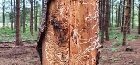 Wageningen wil 151 bomen kappen: 'Het kan niet anders'