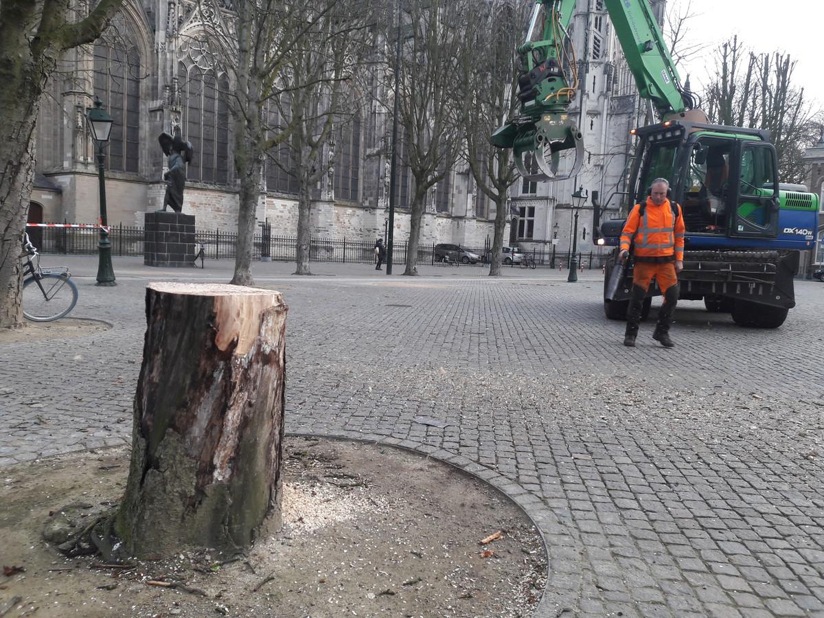 Op de Bossche Parade zijn woensdagochtend vier bomen gerooid. Dit bleef over van een van de kastanjes.