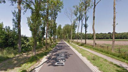 De Manlaan vanaf volgende week een maand onderbroken voor vellen van bomen