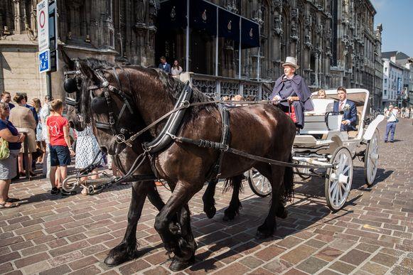 Om met paard en kar op de openbare weg te rijden is géén specifieke vergunning nodig, ook niet in het stadscentrum van Gent.
