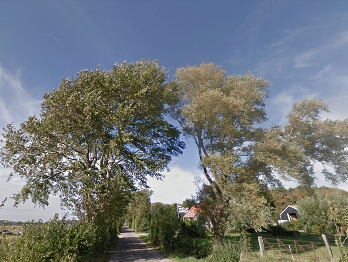 Bomen langs de Noordweg bij Biggekerke.