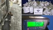 Cocaïne ter waarde van 27 miljoen euro ontdekt in lading suiker op weg naar Antwerpen