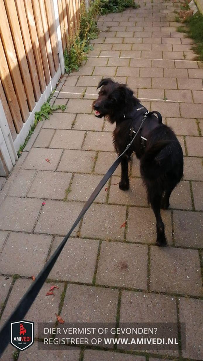 Malu is al anderhalve week vermist. De hond wordt met enige regelmaat gezien, maar gaat er dan als een haas vandoor.