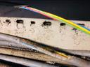 Door ratten aangevreten stroomkabels in boerenschuren.