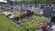 Het kerkhof wordt steeds groener in deze gemeenten (en het erfgoed wordt er ook beter bewaard)