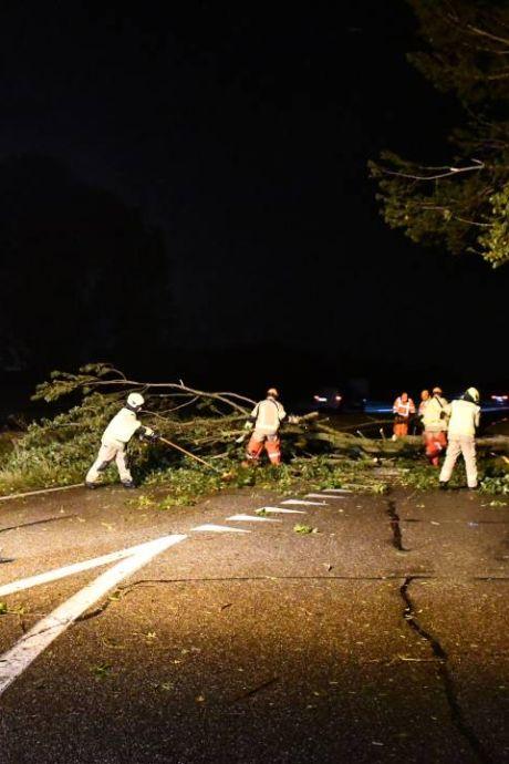 Storm in Zeeland: brandweer rukt 100 keer uit, bomen op woningen, daken van huizen geblazen