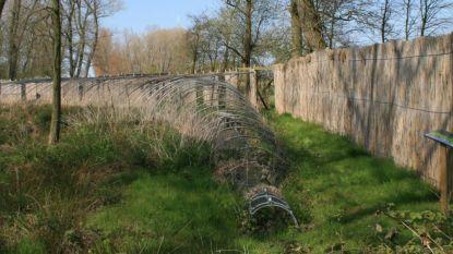 Wordt fameuze Eendenkooi van Meetkerke beschermd?