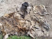 Dierenhuiden in Oude IJssel gevonden