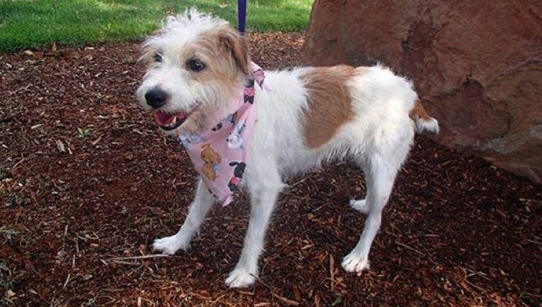 Gidget Beeld AP/ Washington County Animal Services