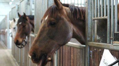 Toeristische paardenkoetsen blijven op stal door hitte