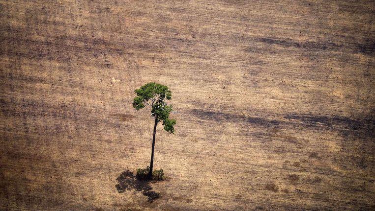 21 procent van de planten wordt met uitsterven bedreigd, aldus Key. Beeld AFP