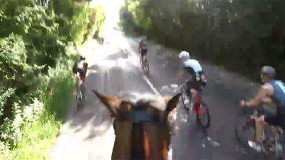 Wielrenners zoeven langs amazone, tot er een tegen haar paard knalt