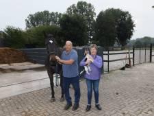 Nuenen weigert op te treden tegen illegale paardenbak en stapmolen