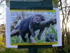 Ontsnapte beermarter jaagt wandelaars stuipen op het lijf