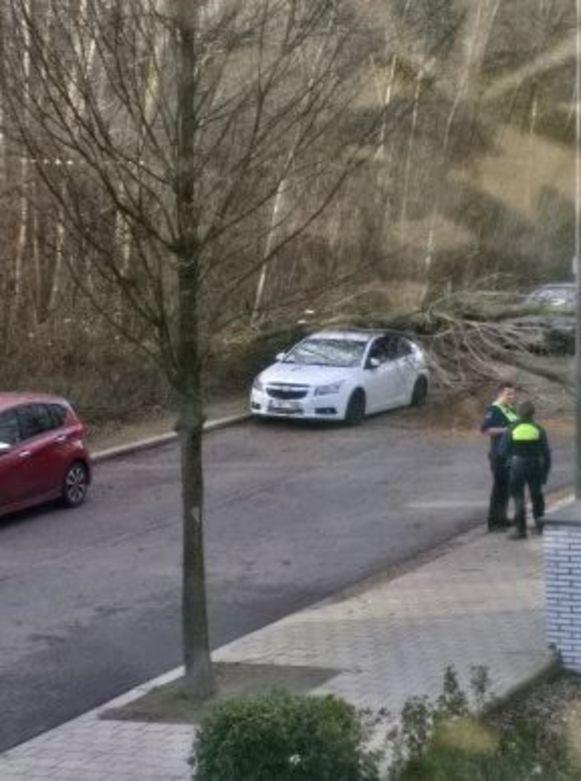 In de Bergen Op Zoomlaan beschadigde een boom zaterdag ook al een geparkeerd voertuig.