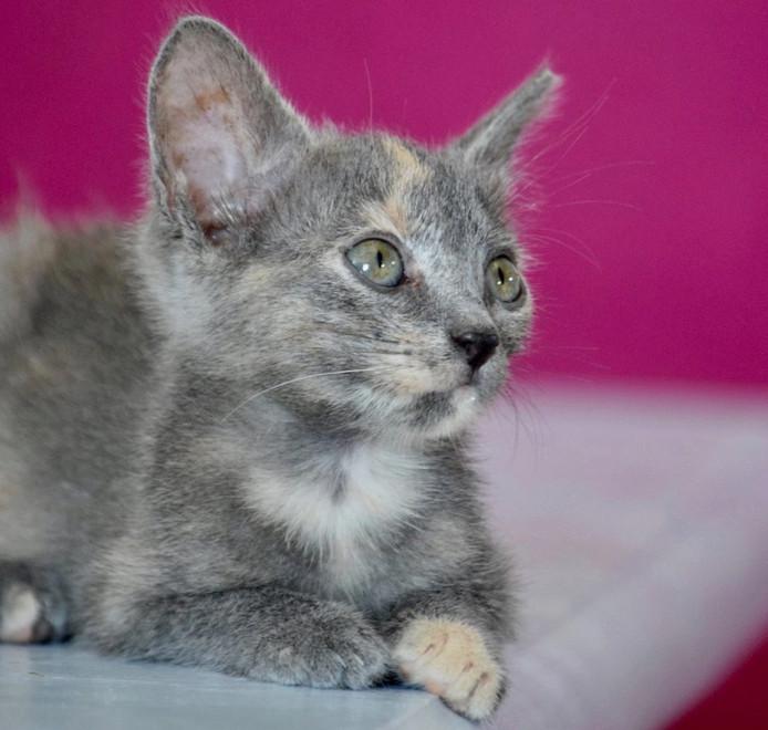 Een van de kittens.
