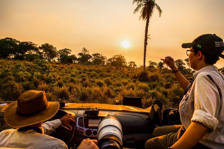 Vanuit een knalgele jeep in het natuurreservaat bekijken toeristen de natuur.  Beeld Noel van Bemmel
