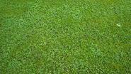 """Groen op zoek naar groene alternatieven: """"Graag meer dan alleen gazon"""""""