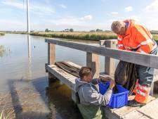 Nieuwe 'visstofzuiger' is een groot succes: paling keert terug in de polders