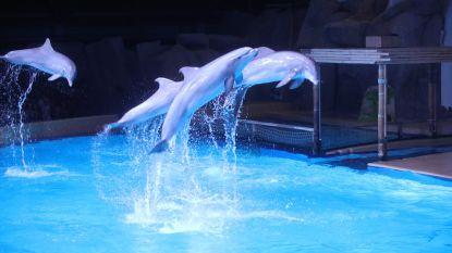 """""""Dolfijnen hebben het hier wél goed"""""""