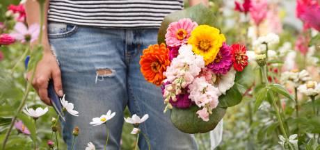 Naar hartenlust bloemen plukken op Blaricums plukfeestje