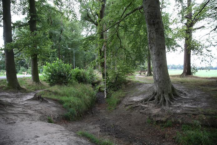Het bos waar de kinderen onzedelijk zijn betast.