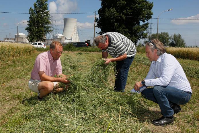 Landbouwadviseur Wim Goverts (rechts) bekijkt met veeboeren Guido van Mieghem (links) en Geert Meersschaert de pas gemaaide luzerne.