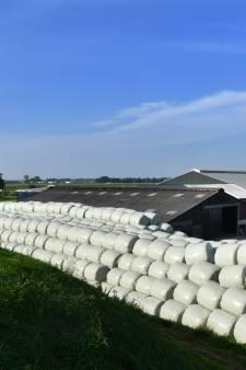 Opgerolde winterkost: in Everdingen zijn de koeien klaar voor de kou