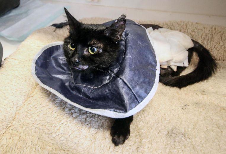 Verhalen zoals van Sprotje, de kat werd door een beul in een snikhete oven gestopt, kunnen straks meteen gesignaleerd worden op een meldpunt.