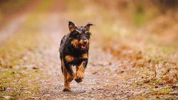 Vrouw vrijgesproken voor doodsteken hond van buren