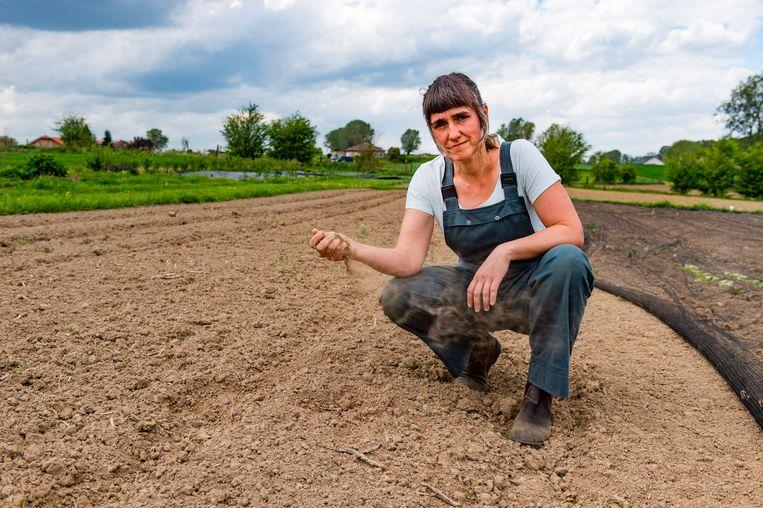 Boerin Sarah, die bio boert voor haar eigen kruidenierswinkel, is bang voor de aankomende droogte. De grond is nu al op een niveau dat de minste zon de oogst kan doen mislukken.