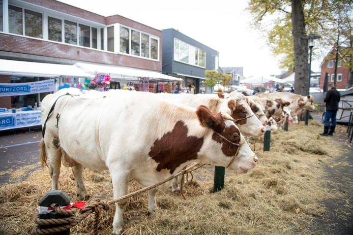 Het feest Sunte Mart'n, met onder meer de traditionele veemarkt, is dit jaar van 31 oktober tot en met 4 november in Wierden.