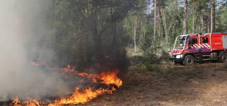 Pas op met vuur in de Utrechtse bossen: hoogste alarmfase voor natuurbrand