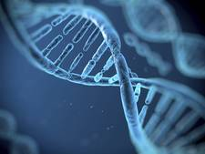 Man uit Schijndel dankzij DNA-match opgepakt voor verkrachtingszaak uit 1995