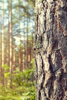 Planter dix arbres pour avoir un diplôme: l'initiative géniale des Philippines
