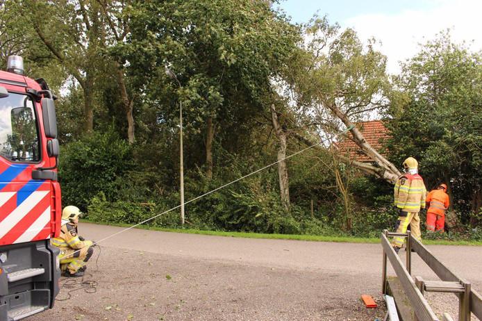 Brandweer voorkomt dat boom op woning valt in Muggebeet bij Blokzijl. De brandweer heeft de boom gezekerd aan hun auto en daarna de boom omgezaagd. Met een luid geraas kwam de boom enkele meters naast de woning terecht.