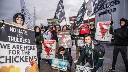 Dierenrechtenorganisatie Animal Rights voert actie aan kippenslachterij Nollens in Kruishoutem
