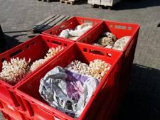 Politie mist nog illegale schedels en zagen na inval bij groothandel Berghem