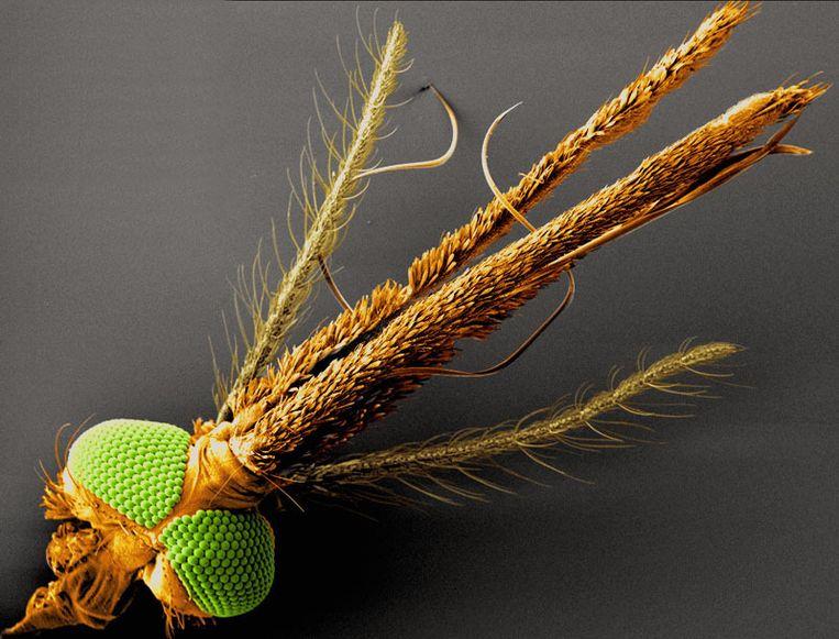 De voorkant van een mug. Beeld Zwiebel Laboratory, Vanderbilt University