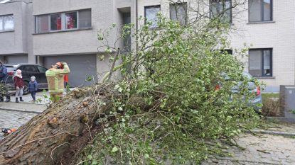 Storm blaast boom tegen de grond: auto beschadigd