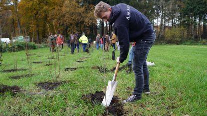 """Natuurpunt en Agentschap Natuur en Bos halen massaal de spade boven op 41ste Dag van de Natuur: """"Bomen kappen doen we heus niet voor ons plezier"""""""
