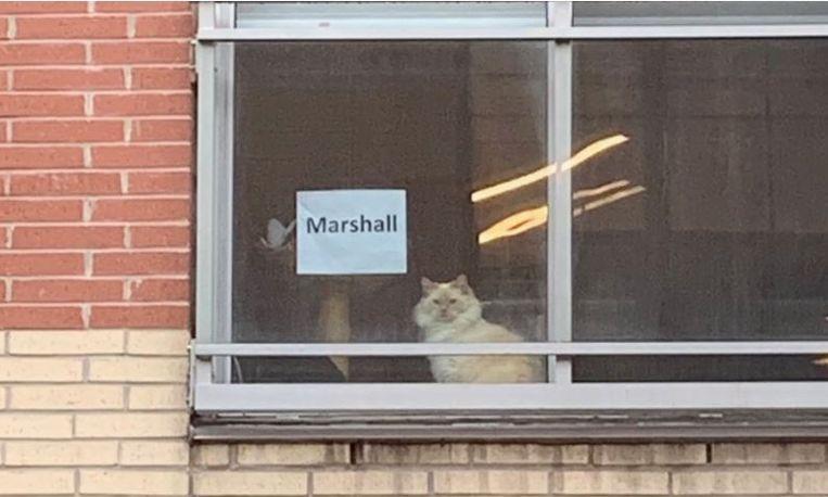Nadat de vraag wekenlang had opgehangen, kregen Erika en haar collega plots antwoord. De witte kat die ze elke dag zien zitten vanuit hun kantoor heet Marshall.